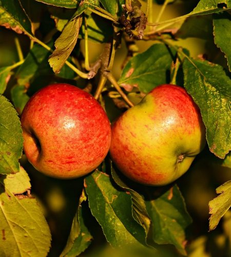 red-apple-3689832_1280